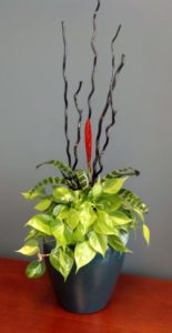 Green Indoor Plant Bromeliad Arrangement