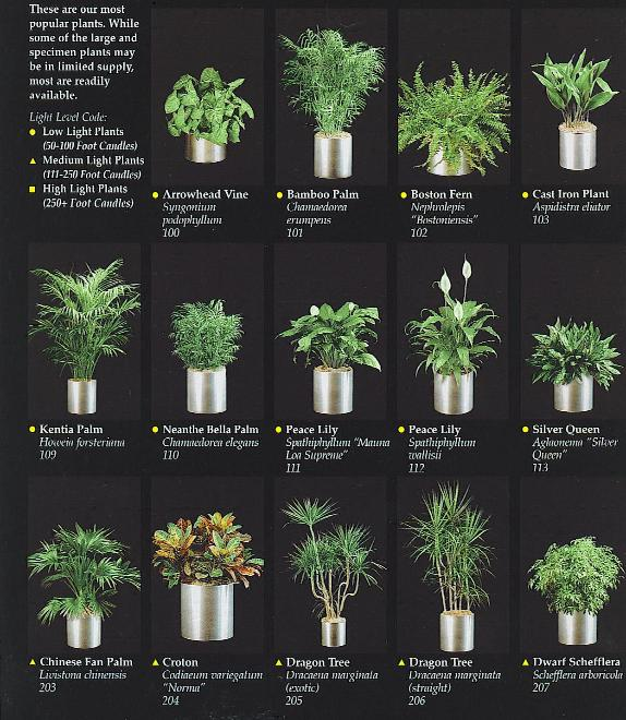 Indoor Plant Are Placed In Your Decorative Planters Of Choice To Match Your  Interior Environments.