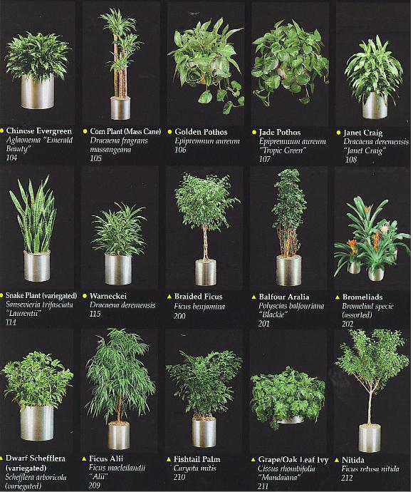 tropical houseplants plants catalogue - Tropical House Plants