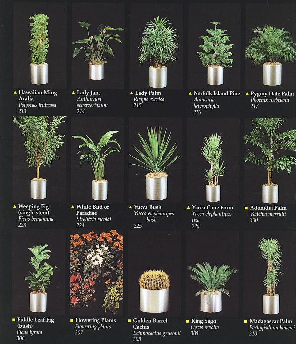 Plants san diego interior plants for Catalogue plantes