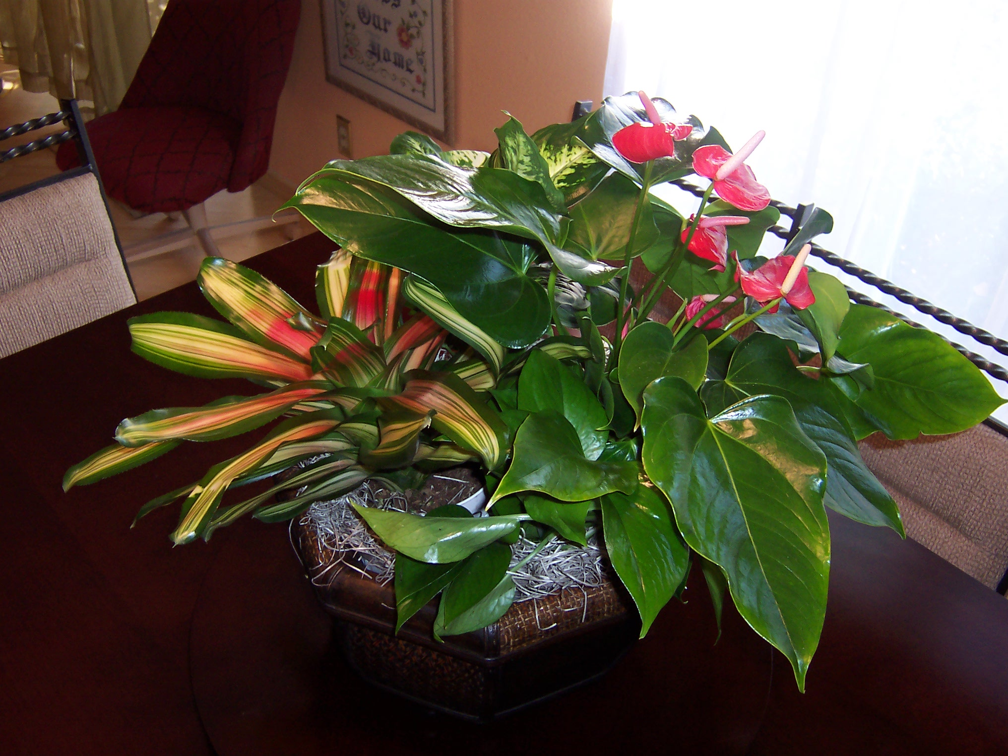 Flower Bowl - Residential Plant Service